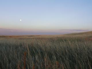 обои Вечернее поле фото