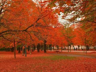 обои Красивые оранживые,  осенние деревья фото