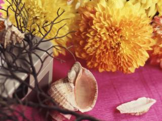 обои цветочки и ракушки фото