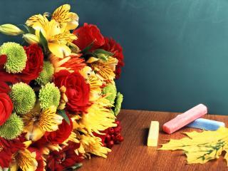 обои мелки и цветы фото