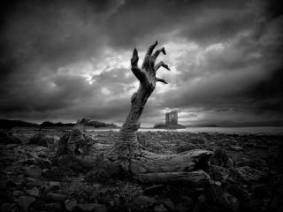 обои Рука из дерева фото