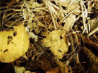 обои Опавшие листья фото