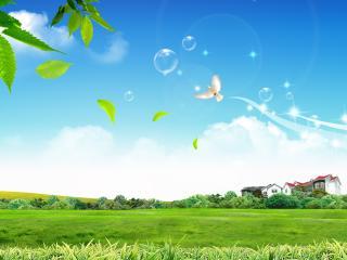 обои Пузыри голубь дом фото