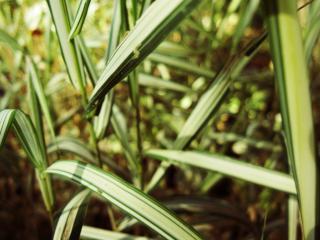 обои для рабочего стола: Зелёная трава