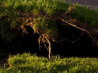обои Зелёная трава и корни фото