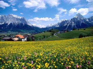 обои Красивое цветущее поле фото