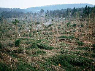 обои Деревья уничтожены штормом фото