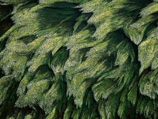 обои Растительность в Луар фото
