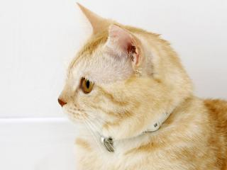 обои Класненький котя фото
