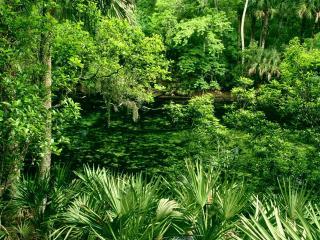 обои Густые заросли джунглей фото