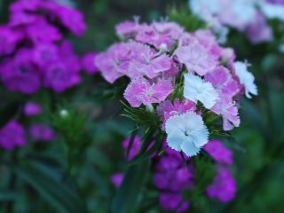 обои Фиолетовый цветок фото