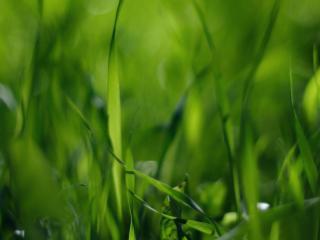 обои Зелёная трава фото