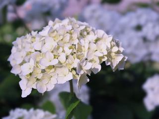 обои Красивый белый цветок фото