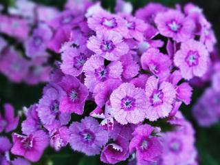 обои Сиреневые цветы фото