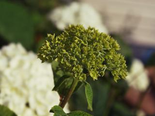обои Зеленый цветочек фото