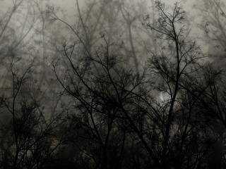 обои Деревья на мрачном фоне фото