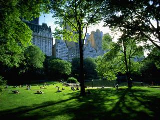 обои Зеленый парк фото