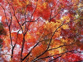 обои Осенняя пора фото