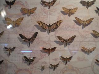 обои Бабочки на карте фото