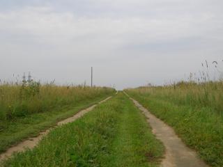 обои для рабочего стола: Дорога в поле