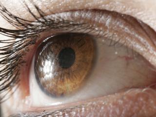 обои Карий глаз фото