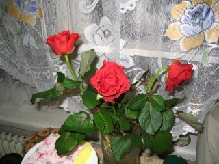 обои Красные розы фото