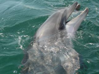 обои Улыбка Дельфина фото