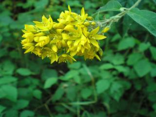 обои Желтый цветок и листья фото