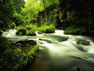 обои Таинственный весенний ручей фото