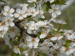 обои Белые цветы крупным планом фото