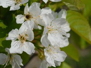 обои Цветы макро съемка фото