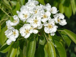 обои Крупный план белых цветов фото