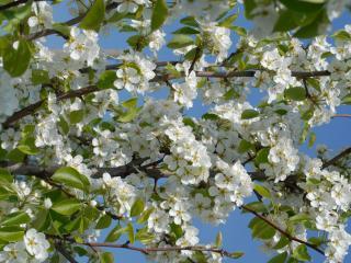 обои Цветы на фоне неба фото