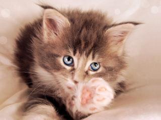 Банк Обоев Ру: обои Собаки и кошки (Животные и птицы ...