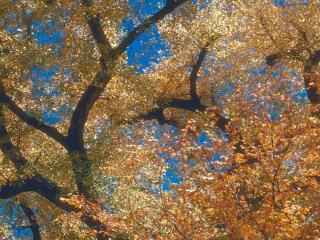 обои Осеннее небо фото