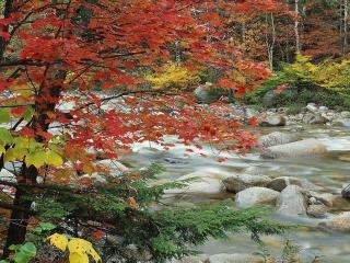 обои Осенняя река фото