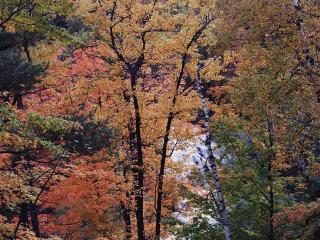 обои Поздняя осень фото