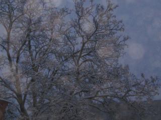 обои Деревья зимой фото