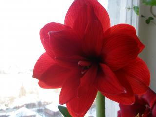 обои Большой цветок фото