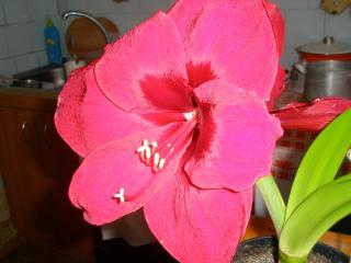 обои Пёстрый цветок фото