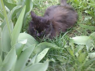 обои Кот на лужайке фото