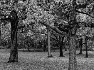 обои Осенний лес черно белый фото