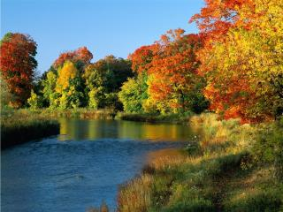 обои Разноцветное,   лес фото