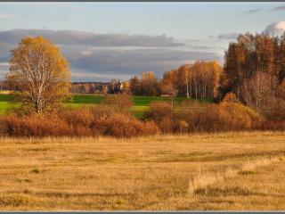 обои Осень,   лес!. фото