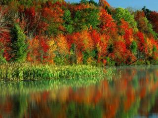 обои Красивая осень фото