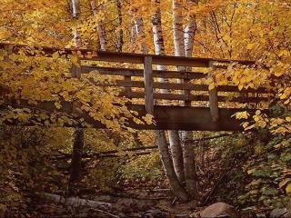 обои Осень и мост фото