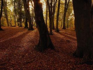 обои Солнце в осеннем лесу фото