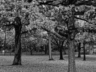 обои Парк с большими деревьями фото