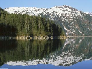 обои Береговой лес в Аляске фото