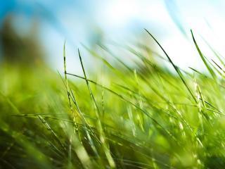 обои Трава макросъемка фото